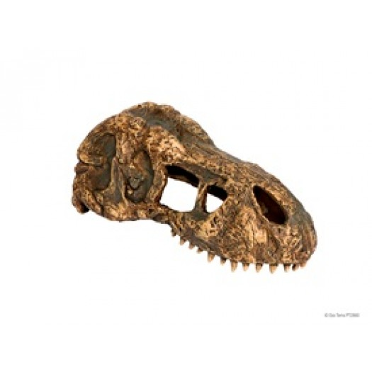 T-Rex dinozauro kaukolės dekoracija