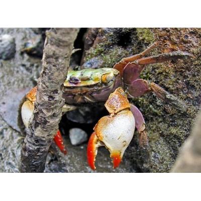 Vėžiagyviai Crustacea