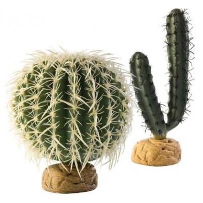 Dykumos augalai