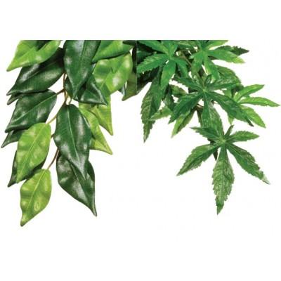 Džiunglių augalai