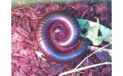 Nariuotakojai (Arthropoda)