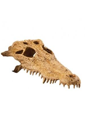 Krokodilo kaukolės dekoracija, 22x22x10 cm