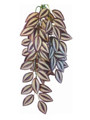 Tradescantia zebrina augalas, 50cm