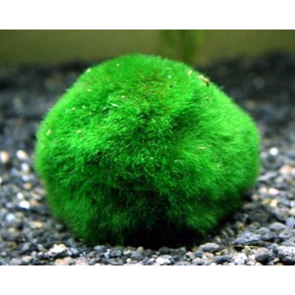Fluval dirbtinių samanų absorbuojantis kamuoliukas