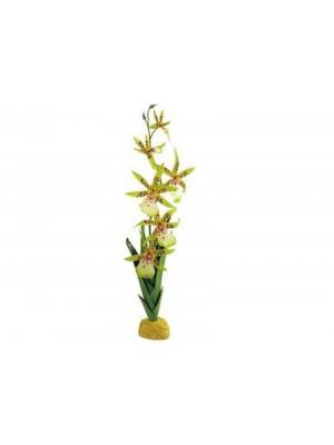 Vorinė orchidėja