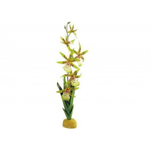 Vorinė orchidėja, 7.6x12.7x43.2 cm