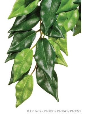 Džiunglių fikusas, mažas (45x20cm)