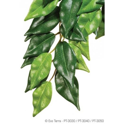 Džiunglių Fikusas, 55x25 cm