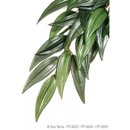 Džiunglių Ruskusas, 5.1x17.8x55.9 cm