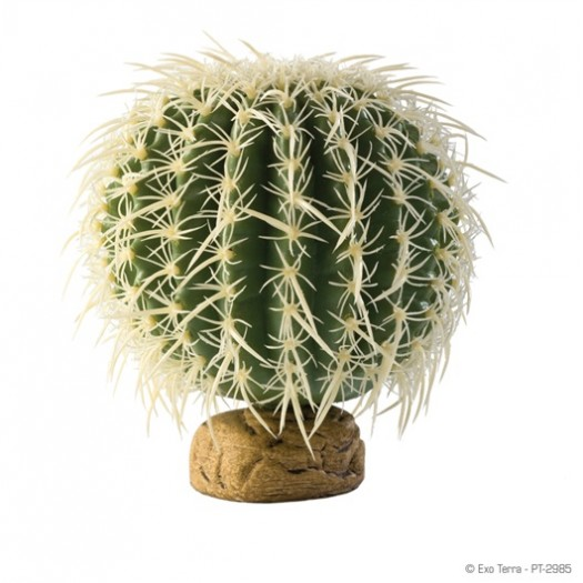 Kaktusas Barrel, 17x17x16.51 cm