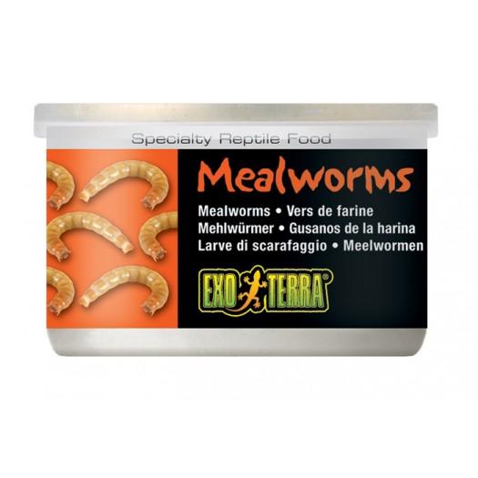 Canned Foods - vabzdžių lervos, 34 g