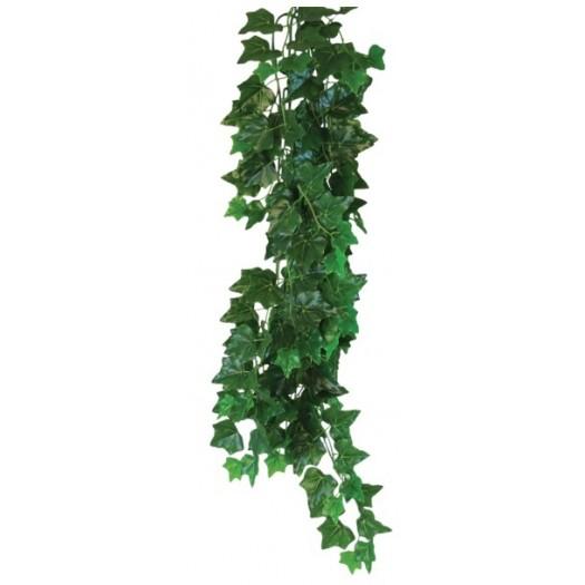 Hedera helix augalas, 70cm